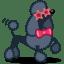 Dog poodle icon