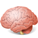 http://icons.iconarchive.com/icons/icons-land/medical/128/Body-Brain-icon.png
