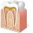 Body Tooth Anatomy icon