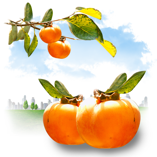 Fruits-Persimmon icon