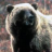 Bear-2 icon