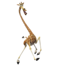 Melman 3 icon