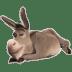 Donkey-2 icon