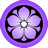 Purple-Kikyo icon