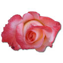 Rose China icon