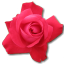 Rose-Cerise icon
