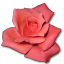 Rose Coral icon