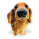 Calvinism Puppy-4-icon