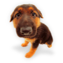 Puppy 6 icon