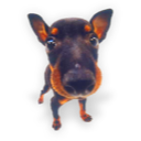 Puppy 8 icon