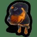 Puppy 9 icon