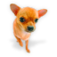 http://icons.iconarchive.com/icons/wackypixel/dogs-n-puppies/64/Puppy-3-icon.png