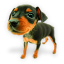 Puppy 7 icon