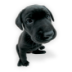 Puppy-2 icon