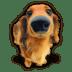 Puppy-4 icon