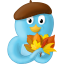Fall leaves icon
