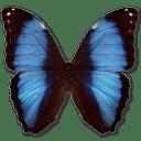Morpho Deidamia Erica icon
