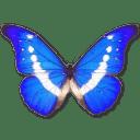 Morpho Helena icon