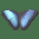 Morpho Peleides icon