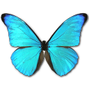 Morpho Rhetenor Cacica icon