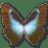 Morpho-Cissis icon