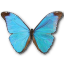 Morpho-Absoloni icon