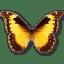 Morpho-Diana icon