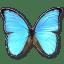 Morpho-Didius icon