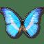 Morpho-Helena-Personal icon