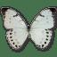 Morpho-Luna-Male icon
