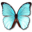 Morpho-Menelaus-Hubneri icon