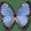 Morpho Partis Thamyris icon