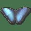 Morpho-Peleides icon