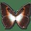 Morpho-Phano-Red icon