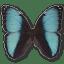 Morpho-Pseudogamedes icon