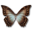 Morpho-Theseus-Amphotrion icon