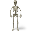 Standing skeleton icon