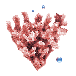 Coral icon