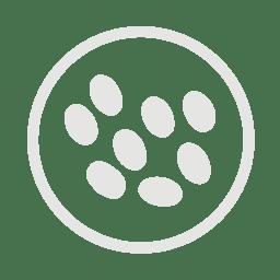 Sesame allergy grey icon