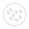 Sesame-allergy-grey icon