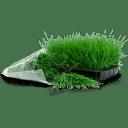 Wheatgrass tray bag icon