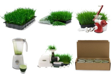 Wheatgrass Icons