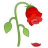 22323-wilted-flower icon