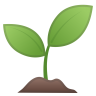 22328-seedling icon