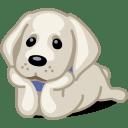 Dog labrador icon