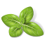 Herb Basil icon