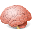 Body-Brain icon