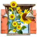 Flowers Sunflowers Window icon