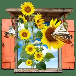 Flowers Sunflowers Window icon