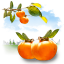Fruits Persimmon icon